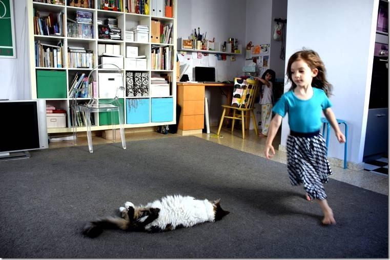 שום דבר לא מזיז לחתול הזה