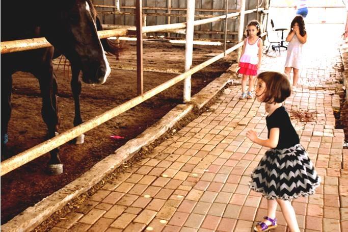 סוס, אתה מלחיץ!