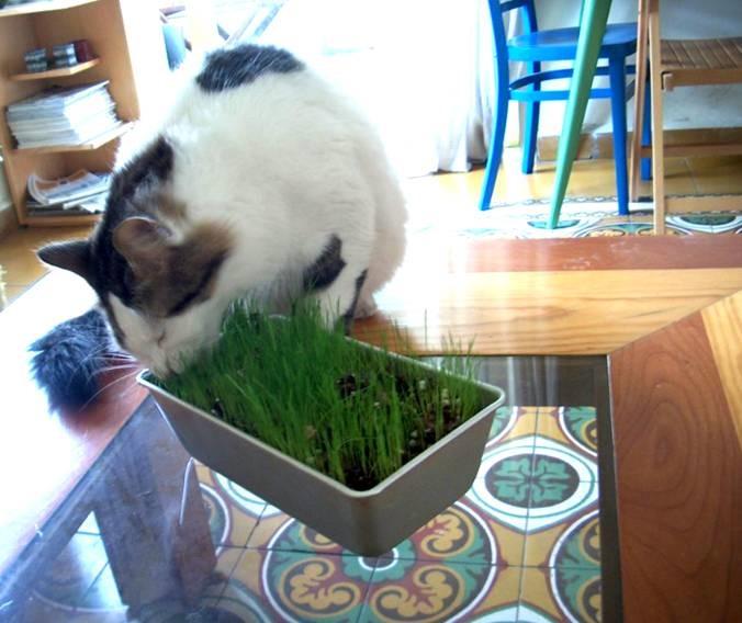 תאכל דשא ואחר כך תקיא לי על כל הבית...