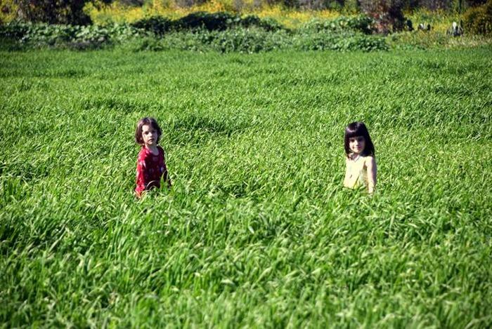 הדשא של השכן גדול וירוק