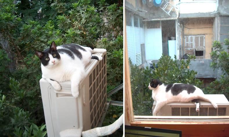 החתול ירמייאוווו צופה על שינקין