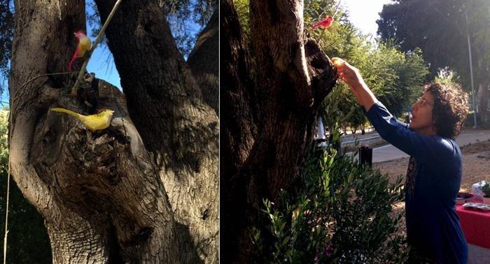 עץ זית וציפורים בכאילו