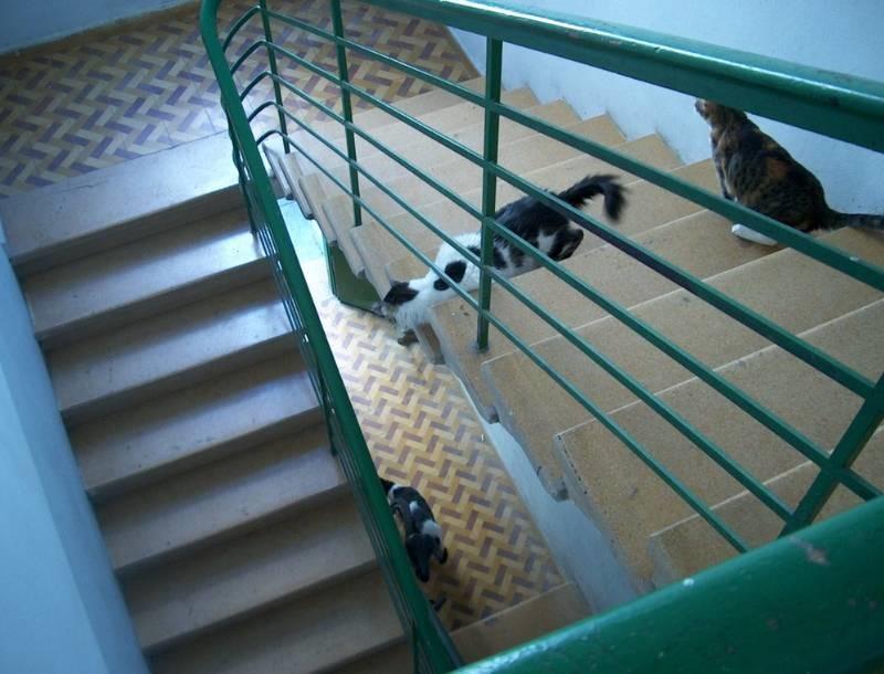 החתול ירמיהו בדרך לקפה שלו בשינקין